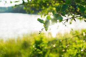 Summer landscape with sunshine