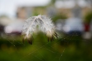 Feathers in the Web