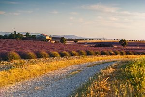 Country roads of Provence
