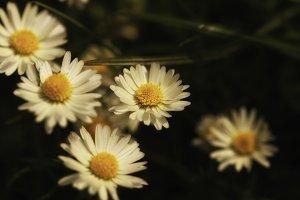 Blume #3