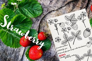 Vector garden strawberry