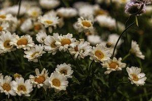 Blume #4