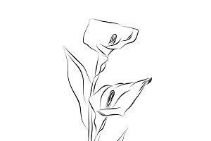 lily flower, sketch design