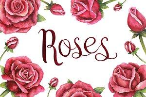 Watercolor handdrawn roses