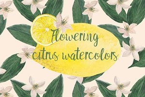 Flowering citrus watercolors