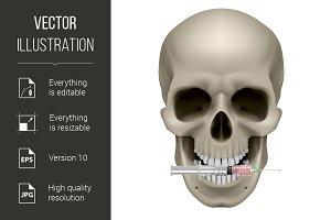 Human skull and syringe