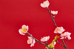 Chinese new year's decoration for Spring festival