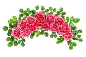 Roses with green leaves