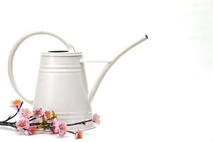 watering can with flower