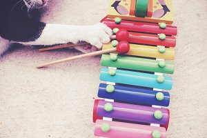 A kitten plays xylophone toy