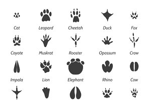 Animal tracks and bird footprints