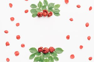 Red roses on white background.
