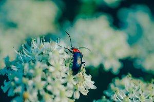bug in a flower