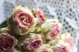 Pink Roses and Lace