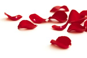 Red rose petals lying down