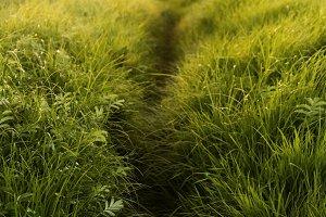 Footpath in Salt Meadow