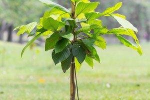Small tree plantation