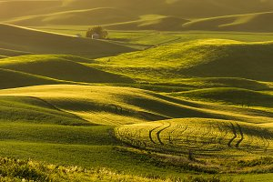 Rolling Fields at Sunset