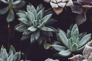 Succulents in the Garden Bundle