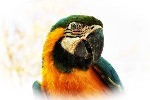 Colourful Macaw head