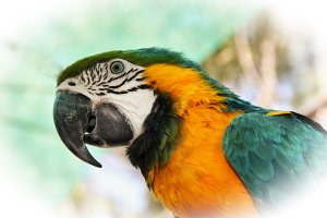 Colourful Macaw head