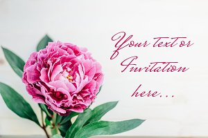 Peonies stock photos | 10 images
