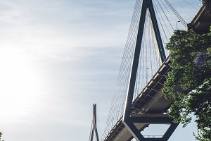 Bridge over forest