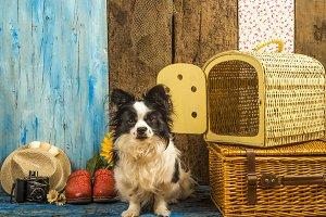Summer holidays little dog