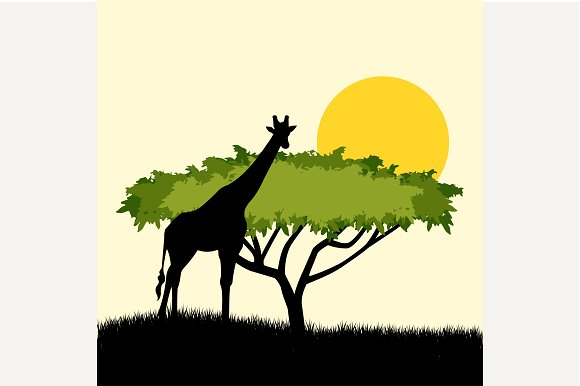 Acacia tree and giraffe