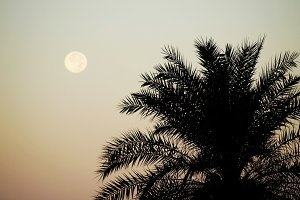 full moon and palm trees