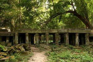 Ancient Jungle Ruins in Cambodia