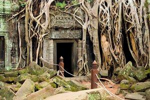 Ta Prohm Temple Ruins in Cambodia