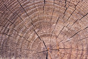Tree stump texture