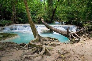 Fallen Tree By The Waterfall
