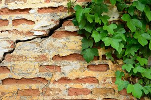 Ancient brick wall with ivy