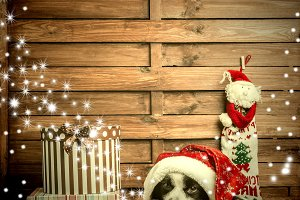Christmastime greeting card puppy
