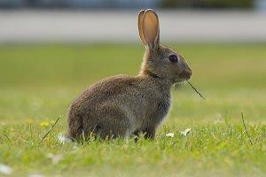 Bunny Fluffie Bunny