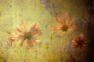 Daisies on grunge background texture