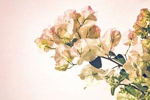 iseeyouphoto bougainvillea flowers