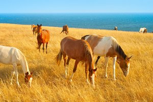 Horses near the sea