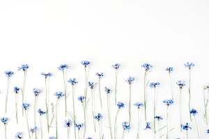 Floral pattern with cornflowers