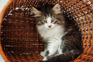 Kitten hiding in a basket