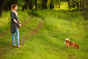 Girl holds leashed dog Shiba Inu.