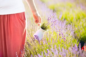 Beautiful lavender field.