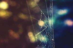 Glowing Web