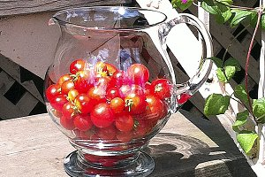 Cherry tomatoes in the sun