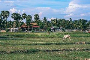 Cambodian Farmland