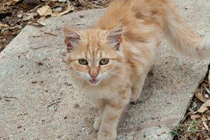 Cat Smile in Yard