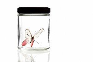 Butterfly in Jar