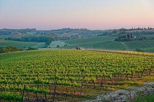 Tuscan vineyard at sunrise